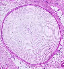 Microscope picture of human skin