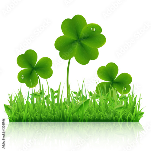 Green Grass With Clover