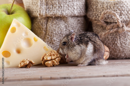 Rodent in the pantry