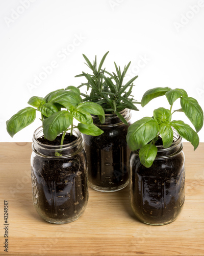 Three herb plants on wooden table