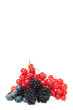 Beerenfrüchte