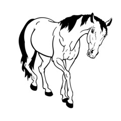 horse black white on white background