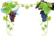 raisin rose, raisin noir, vigne, vin, fromage