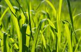 Grüne Anzeichen der natürlichen Schönheit