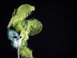 Traditional Venetian Carnival Mask.