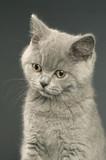Fototapete Kittens - Kätzchen - Haustiere