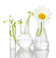 Test-tubes with a transparent solution and the plant isolated