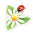 Lady bug with daisy
