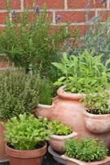 Kräuter - Herbs
