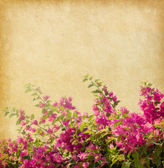 Dark pink bougainvillea against a background of old paper