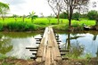 Wooden bridge to the rice field