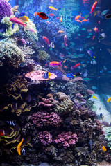 Saltwater Aquarium with Tropical Fish