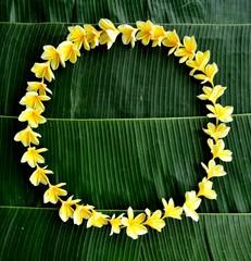 Yellow plumeria on banana leaf