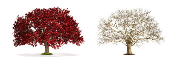 Ironwood Tree.
