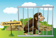 chimpanzee in cage