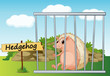 hedgehog in cage