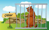 otter in cage