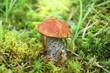 Mushroom in wood