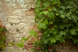 Fototapety Stone wall and green plants