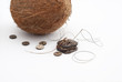 A Coconut and  Buttons handcrafted from Coconut Shell.