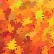 Vector illustration maple leaf background