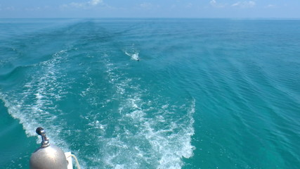 Barracuda, catched from boat