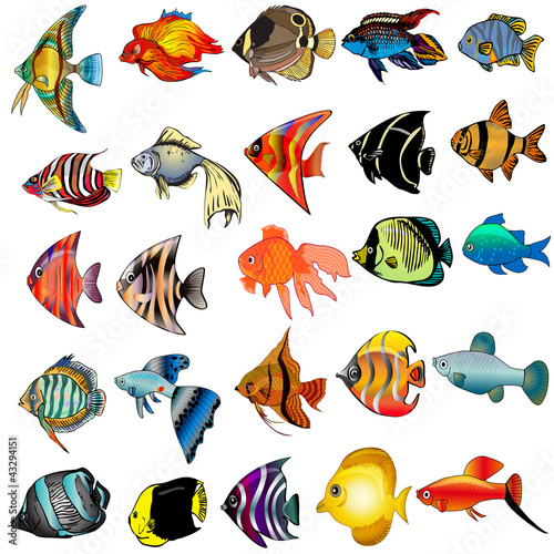 kit fish is insulated on white background