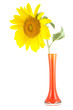 isolated sunflower vase
