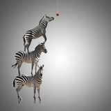 Stack Of Zebra Reaching To Eat Apple
