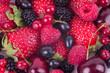 fruit of cherry, strawberry, raspberry, currant