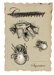 MICRO WORLD tick - hand-drawn image in vintage style