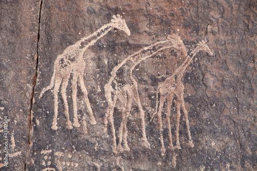 Poster Algerije Ancient rock engraving in Sahara Desert