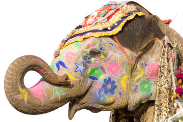 colorful elephant , Holi festival ,Jaipur, Rajasthan, India