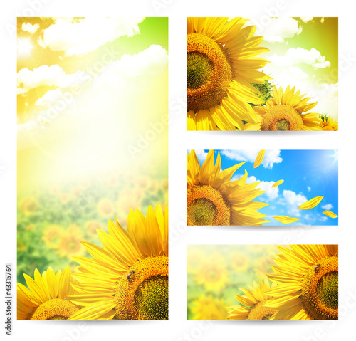 Summer web banner or backgrounds with flowers of sunflower
