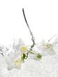 Fototapeten,orchidee,blume,weiß,wasser