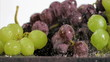 Purple and green grapes in super slow motion being wet
