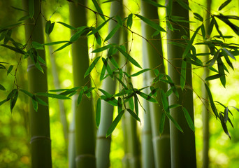 Bamboo forest background © silver-john