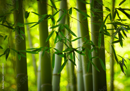 In de dag Bamboe Bamboo forest background