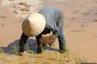 Planteuse de riz