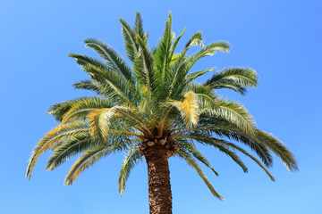 Palm tree with blue sky