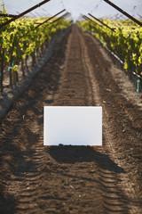 Blank placard in vineyard row