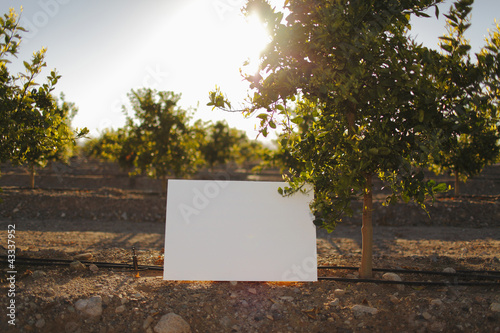 Blank placard in orchard