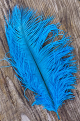 Bright blue quill