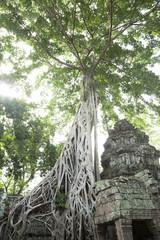 Ruins in Ta Prohm temple