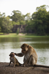Monkeys sitting near river