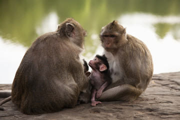 Monkeys sitting near river