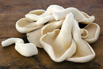Oyster Mushrooms on Old Timber