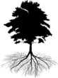 pine tree with root silhouette