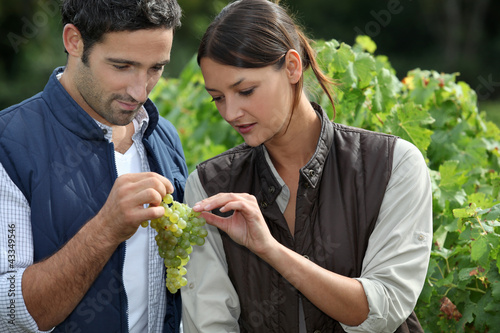 Couple examining grape vine
