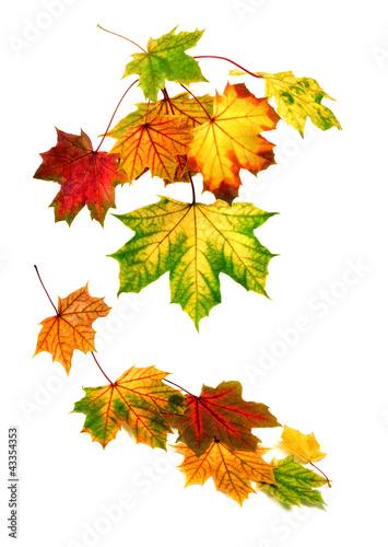 Arrangement aus Herbstblättern